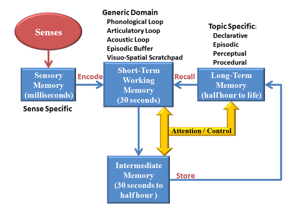 memory encoding storage and retrieval Activation in the hippocampal region associated with episodic memory encoding has been shown to occur in the rostral portion of the region whereas activation associated with episodic memory retrieval occurs in the caudal portions this is referred to as the hippocampal encoding/retrieval model or hiper model.
